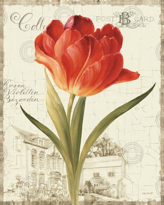 Garden View IIIRed Tulip