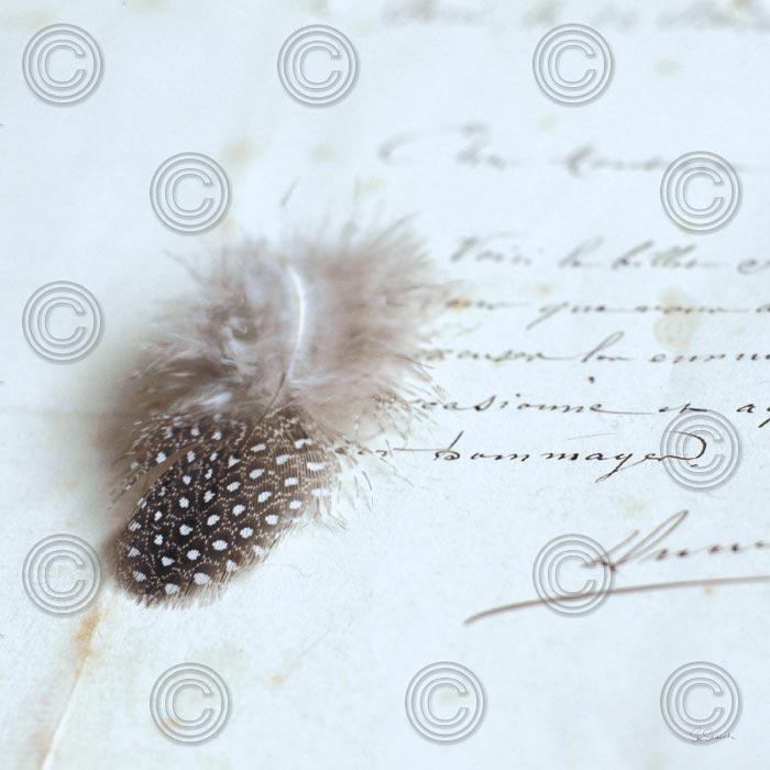 Plume Letters II