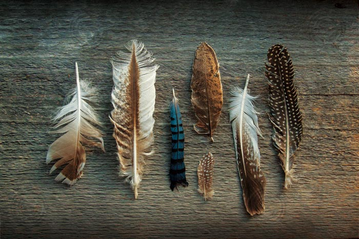 Feather Collection I