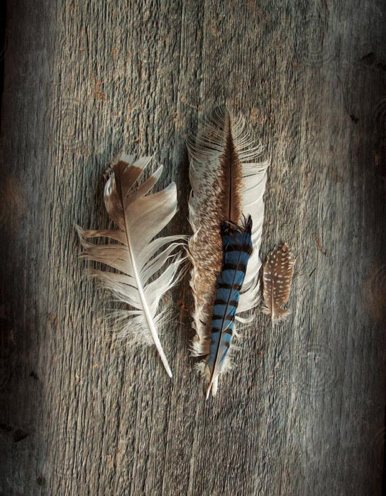 Feather Collection III