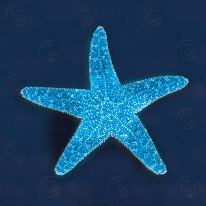 Cyanotype Sea III